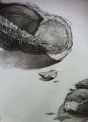 创意素描《花生》